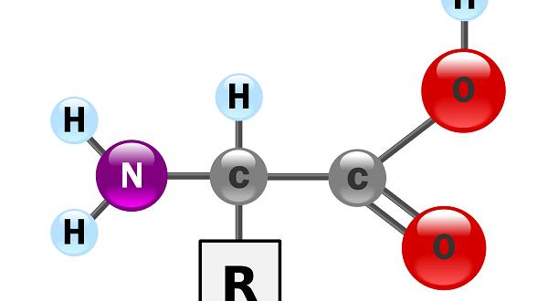 amino-acid