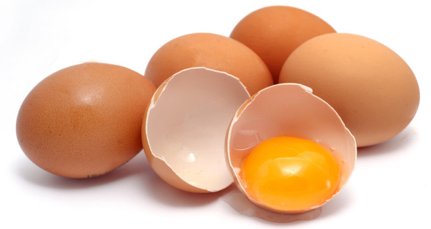 egg-protein