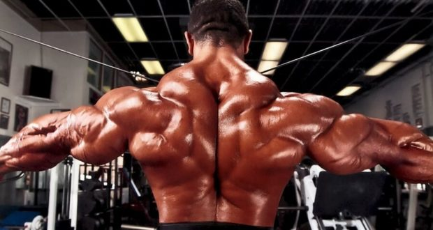 Back Muscle Anatomy And The Best Back Exercises - Bodybuilding ...